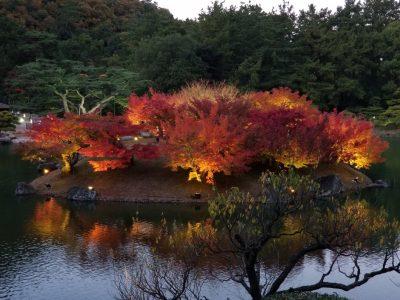 栗林公園秋のライトアップ01