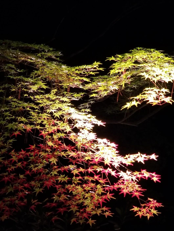 栗林公園秋のライトアップ02