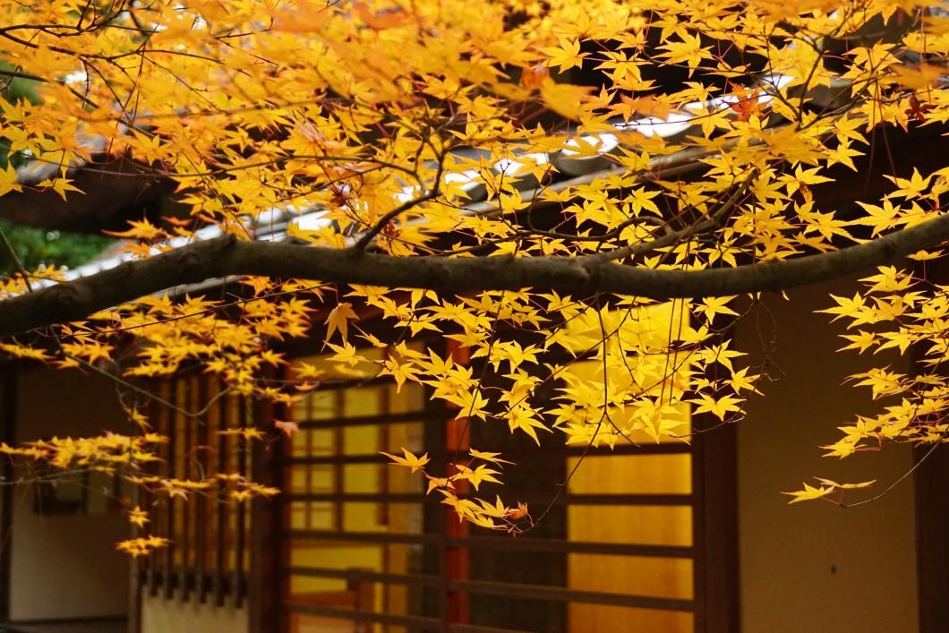 栗林公園秋のライトアップ